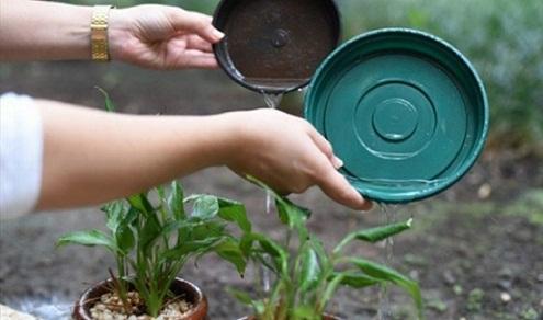 Evitar o acúmulo de água parada em recipientes é fundamental