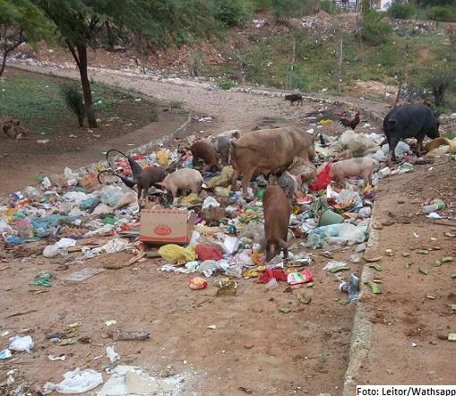 Lixo exposto atrai animais e insetos