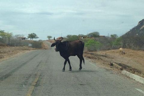 Perigo frequente nas rodovias federais e estaduais